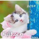 Katzen 2020