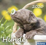 Hunde 2020  9783936673289