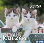 Katzen 2020  9783932640674